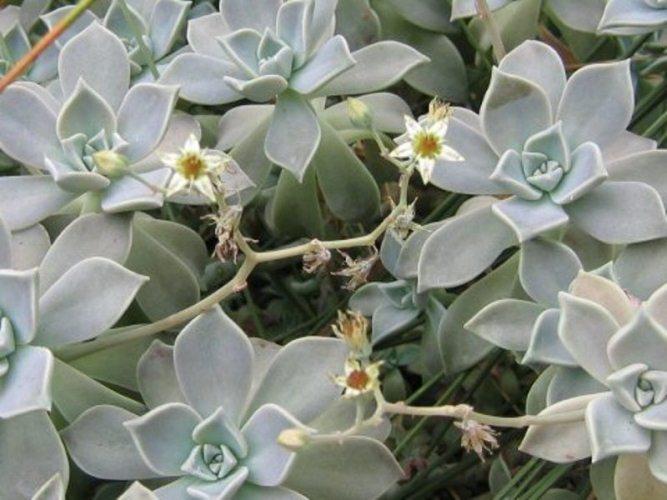 Piante succulente giugno il mese dedicato a queste - Piante grasse da esterno in inverno ...