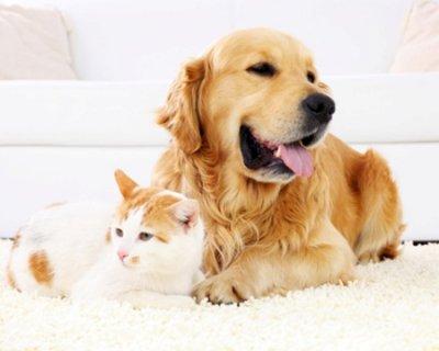 Come pulire la casa dai peli degli animali domestici
