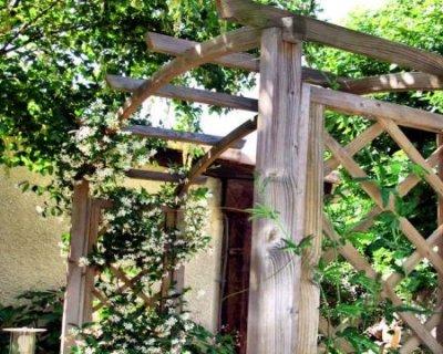 Piante antizanzare dagli svariati utilizzi in casa for Solo piante