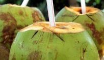 Acqua di cocco, bevanda fresca e dissetante ideale per l'estate