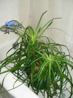 Come prendersi cura delle piante durante le vacanze, per evitare che ...