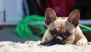 Bau Beach in Italia, le spiagge attrezzate per i cani