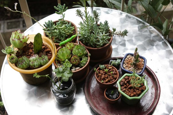 Come proteggere le piante del terrazzo o balcone durante l 39 autunno e l 39 inverno - Piante grasse da esterno in inverno ...