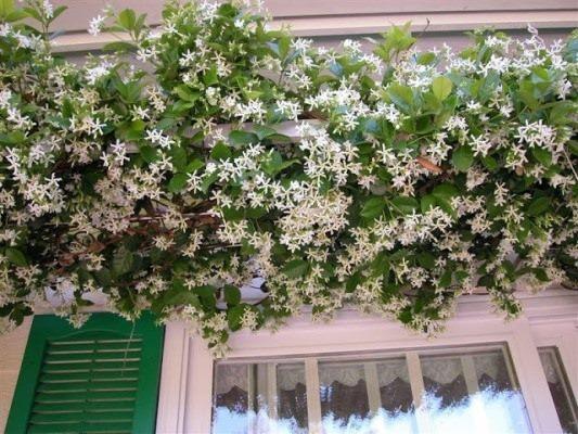 Come proteggere le piante del terrazzo o balcone durante l\'autunno ...