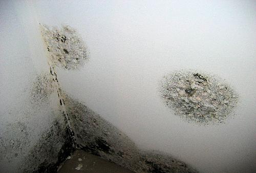Detersivi fatti in casa contro la muffa - Eliminare condensa dalle finestre ...