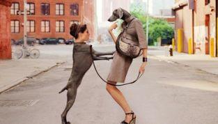 Zoomania e umanizzazione dell'animale domestico