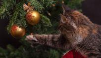 Consigli per difendere l'albero di Natale dai gatti