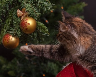 Immagini Natale Con Gatti.Albero Di Natale Come Difenderlo Dai Gatti