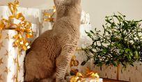 Regali di Natale per cani e gatti