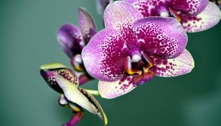 7 Must Have Radiant Orchid 2014