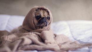 4 motivi per cui l'animale domestico è meglio del partner