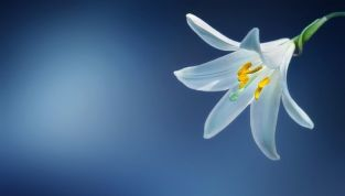 Royal blu mi piaci tu: colore moda inverno 2015