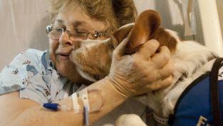 Una zampata alle terapie: pet therapy in oncologia