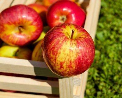 Ricette con le mele, rustiche o chic!
