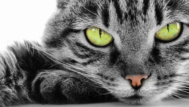 10 domande da farsi per capire il vostro gatto