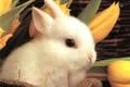 Sms Pasqua
